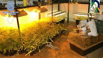 Una de las habitaciones donde se encontraban los esquejes de marihuana.