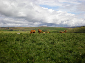 Photo: From Malham Tarn to Fountains Fell