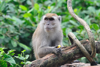 Photo: This monkey is having a meal.