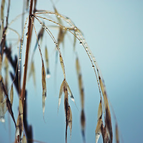tears of the sky by Ana Sampaio - Nature Up Close Leaves & Grasses