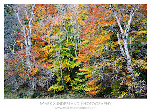 Photo: #FallFriday  Autumn Trees in Strid Wood  Here's my contribution to Fall Friday curated by +Karin Nelson and +Stephonie Ogden. This was captured on a quick visit to Strid Wood near Bolton Abbey in the Yorkshire Dales earlier this week. I'm running a workshop there tomorrow with fellow Yorkshire photographer +sam oakes so I was pleased to see some spectacular autumn colours!  Canon EOS 5D, 24-105mm at 55mm, ISO 100, 0.6s at f16