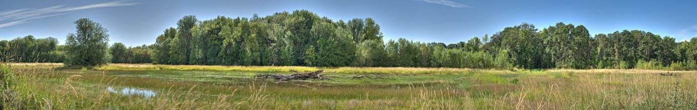 Photo: Marsh at William L. Finley National Wildlife Refuge
