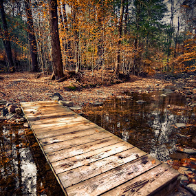 the way. by Colin Gallagher - Landscapes Forests ( water, stream, hdr, d700, autumn, fall, trees, forest, bridge, leaves, nikon )