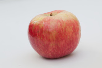 """Photo: 'Honeycrisp'  apple developed by the University of Minnesota, Agricultural Experiment Station.  Project #21-016, """"Breeding and Genetics of Fruit Crops for Cold Climates."""" Principal investigator: James J. Luby; scientist, David Bedford. Released in 1991, 'Honeycrisp' is excellent fresh eating, explosively crisp and juicy, unusually long storage life.  over 8 million trees planted in the U.S."""