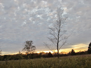 Photo: Lonely tree in an autumn field at Eastwood Park in Dayton, Ohio.