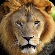 Animal Images App