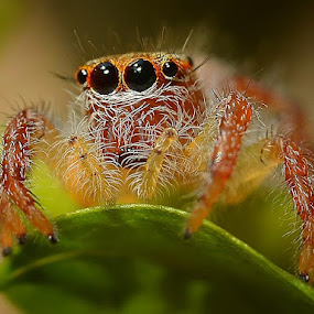 by Danang Sujati - Animals Insects & Spiders