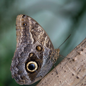 Butterfly by Sarah Tregear - Animals Insects & Spiders ( beautiful, close up, butterfly, tree, closed up, on tree,  )