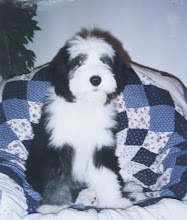 Photo: 3 months old
