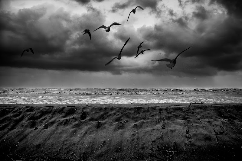 The birds di Marcello Zavalloni