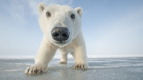 Snowbound: Animals of Winter thumbnail