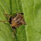 Two-horned treehopper