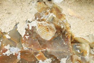 Photo: zabawa w szukanie amonitów