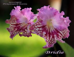 Photo: Bridie
