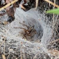 Il ragno e la sua tela di