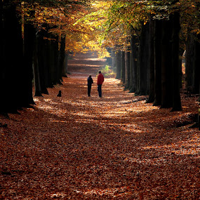 a talk in the forest by Hilda van der Lee - Landscapes Forests ( beech trees, autumn, forest, dog, people,  )