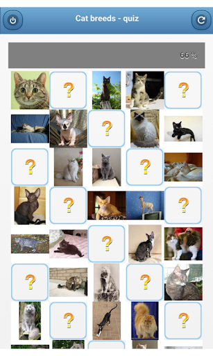 Cat breeds - quiz