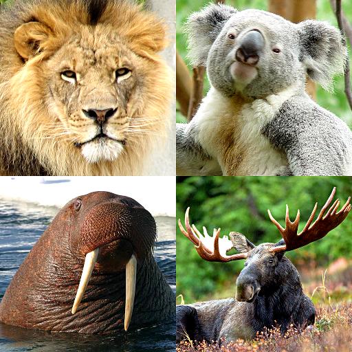 Animals Quiz - All Mammals Zoo