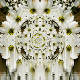 Dogwoods by Ron Meyers - Digital Art Abstract