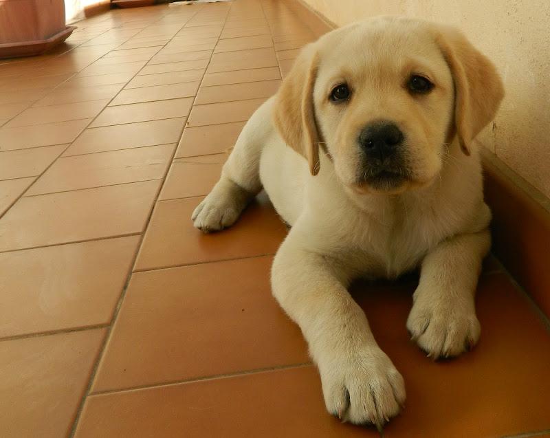 Un cucciolo di EpicMagnaGraecia's