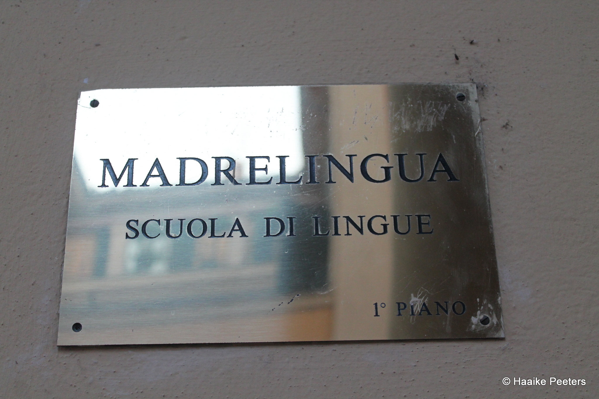 Madrelingua Bologna (Le petit requin)