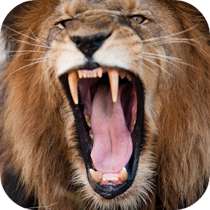 Lion Sounds Android Apps on Google Play