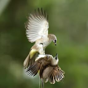Fight by Yan Abimanyu - Animals Birds
