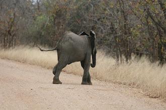 Photo: Kruger NP. No Future. Das linke, hintere Bein war gebrochen.