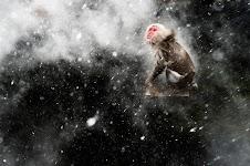 aapje in sdneeuwvlokken
