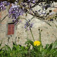A filo d'erba in Alta Garfagnana di