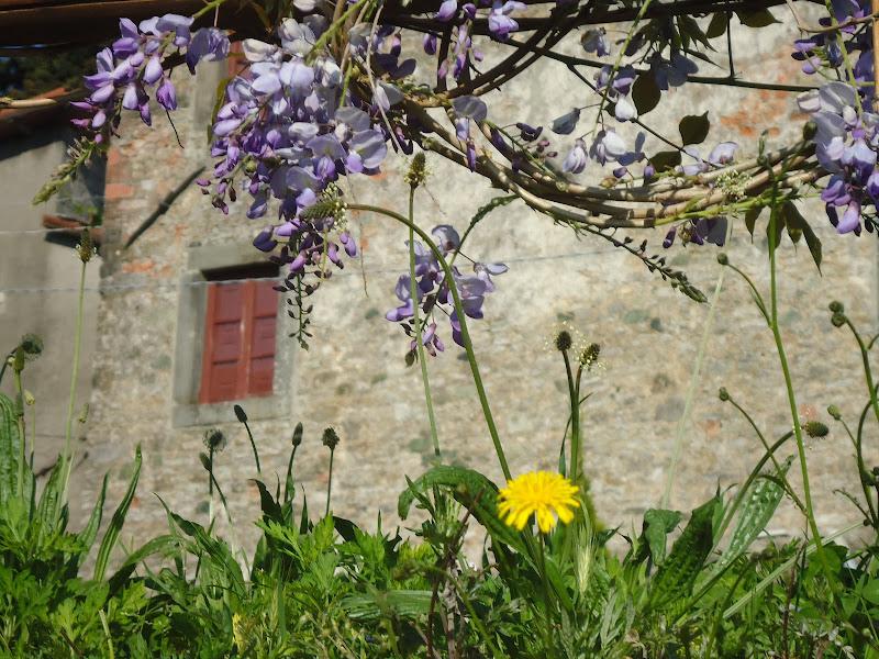 A filo d'erba in Alta Garfagnana di FLORANS