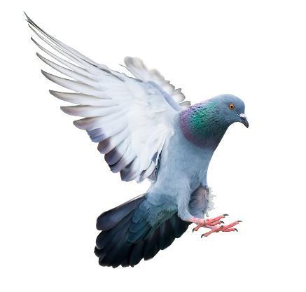 Afbeelding met vogel, papegaai, buiten, duif  Automatisch gegenereerde beschrijving