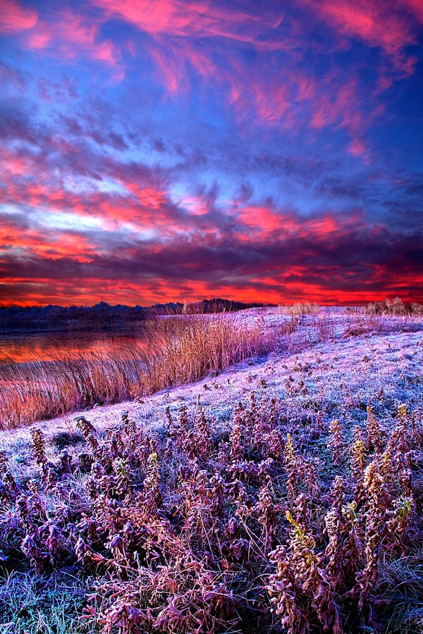 Frost by Phil Koch - Landscapes Prairies, Meadows & Fields ( natural light, vertical, summer. spring, wisconsin, photograph, environement, frost, farmland, yellow, leaves, phil koch, spring, photography, sun, farm, love, nature, autumn, horizons, flowers, inspired, office, clouds, orange, green, twilight, agriculture, horizon, myhorizonart, scenic, morning, portrait, field, red, winter, national geographic, seasons, blue, serene, sunset, peace, fall, meadow, earth, sunrise, landscapes, floral, inspirational, , the mood factory, mood, lighting, sassy, pink, colored, colorful, artificial, lights, scents, senses, hot pink, confident, fun, mood factory  )