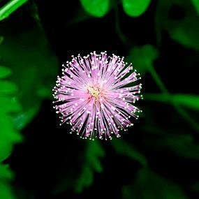 Pinky Flower by Azay Boyan - Nature Up Close Flowers - 2011-2013 ( macro, flora, close up, pinky, flower )