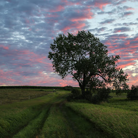 Fresh Air by Laura Gardner - Novices Only Landscapes ( sunsets & sunscapes, landscapes & wildlife, 2015, potential, favorites,  )