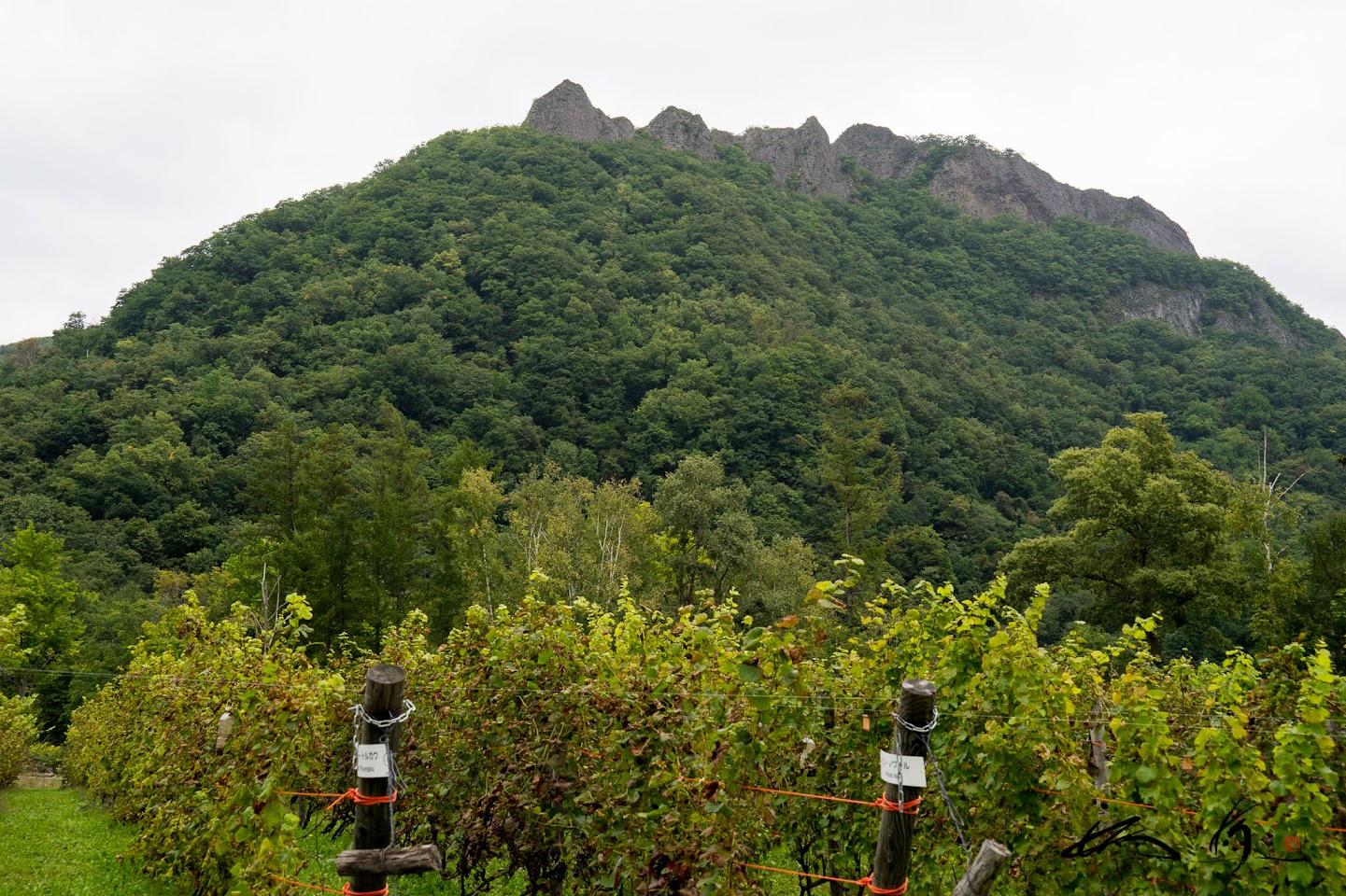 札幌・八剣山ワイナリー