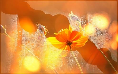 Autumn Flowers 2016 LWP - náhled