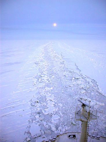 mar artico