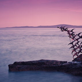 Sea guls by Antonio Rossetti - Buildings & Architecture Statues & Monuments ( statue, sunset, sea, gulls )