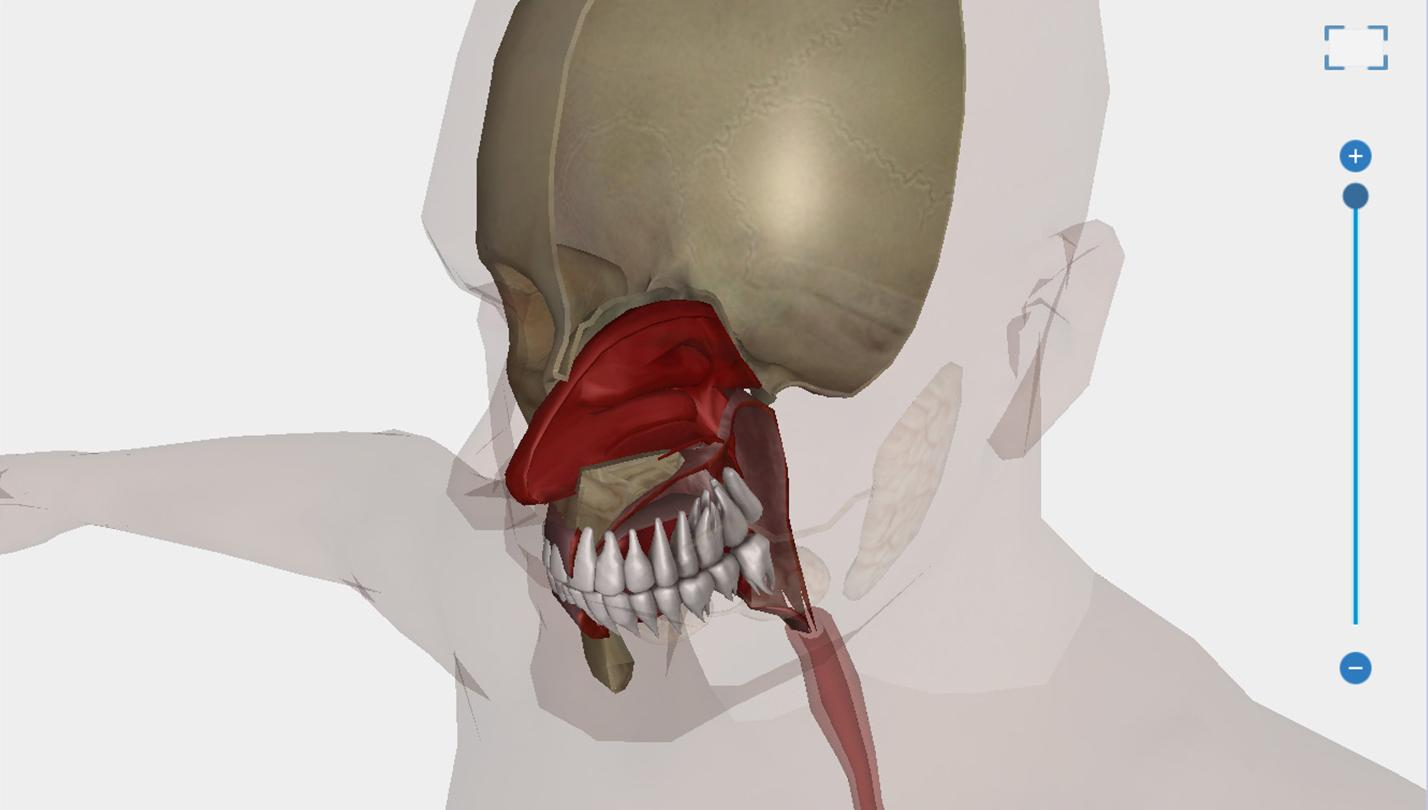 Human Body Anatomy 3D - Free- screenshot