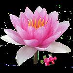 Jigsaw Puzzle: Flowers JPF-2.0.1 Apk