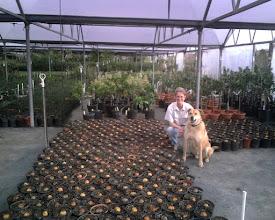 Photo: Heidi of Treesearch Farms, with future avocado trees and her faithful dog Cisco