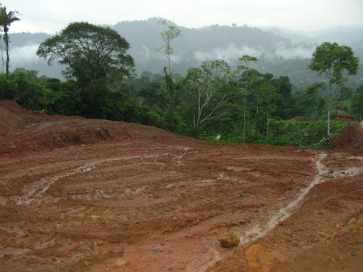 Deforestacion y erosion producen las carreteras en areas protegidas