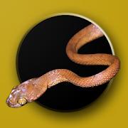 App Icon for Australian Snake ID App in Czech Republic Google Play Store