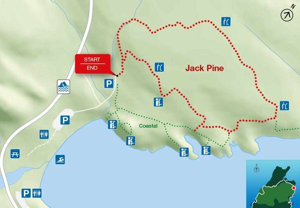 Jack Pine, Park Narodowy Cape Breton Highlands