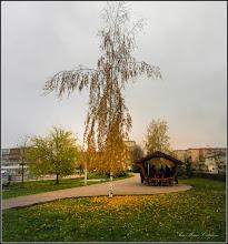 Photo: Mesteacan (Betula) din Parcul Teilor - 2017.11.24
