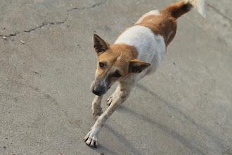 Photo: Vaflis - šuo, mums kompaniją palaikęs ir naktį mus saugojęs draugas.  Wafle - dog, our companion that kept us safe that night in the temple.