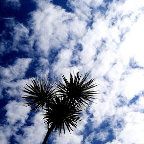 batang pohon bunga yang menjulang tinggi ke langit by Rahayu Fipro - Nature Up Close Other Natural Objects