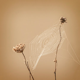 Natures Beauty by Ian Pinn - Nature Up Close Other Natural Objects ( sunrise, web, dawn, spider, seed head, mist )