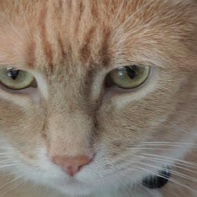 by Lori De Souza - Animals - Cats Portraits